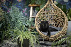 scottish rex cat with plants and a floral backdrop