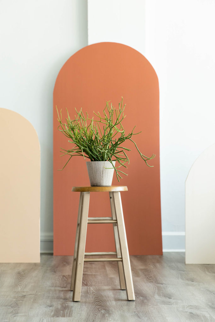 a fire stick euphorbia sits on a still in front of a terra cotta arch in a natural light photography studio